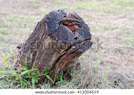 Old wooden stump in forest - stock photo