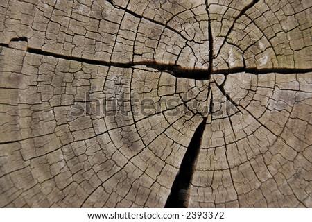 old wooden texture on stump - stock photo