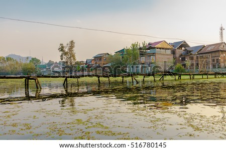 Old wooden walkway bulit for villagers who live by the Dal Lake during sunset trees and houses in a blur background. The reflections on water is shown with blur floating duckweeds in a foreground