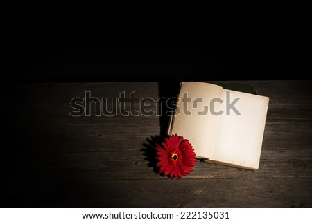 Old, yellowed, blank book and a red flower - stock photo