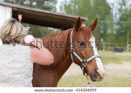 older Arabian brown and white mature horse in pasture being brushed by woman 1
