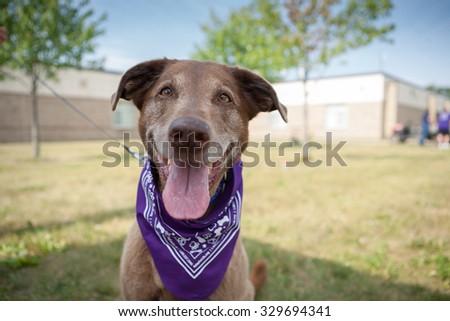 Older Dog closeup - stock photo