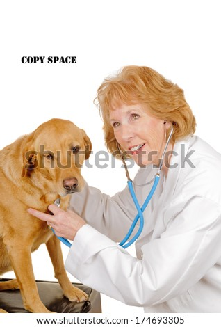 older female Veterinarian checking out a  labrador mix, isolated on white - stock photo