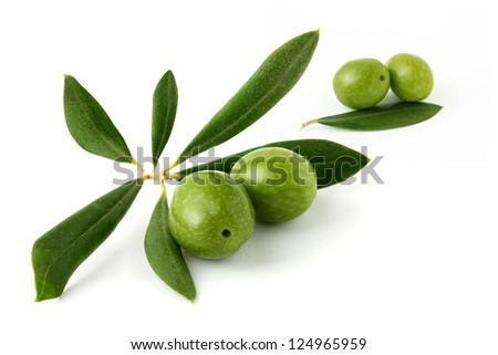 Olive branch and olives #2 - stock photo
