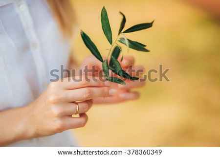 Olive branch in hands - stock photo
