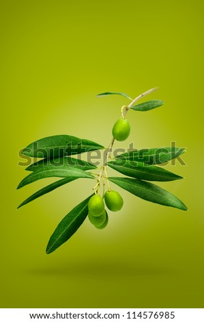 Olive branch isolated on white