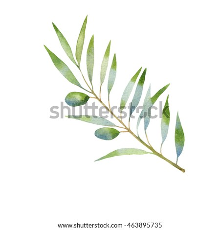 olive branch watercolor. isolated on white background
