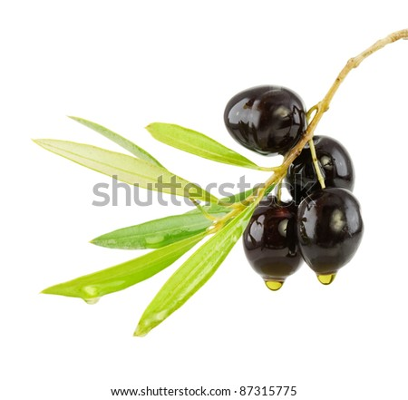 Olive branch with drop of oil isolated on white - stock photo