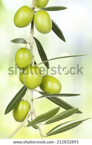 olive branch with green olives against abstract background