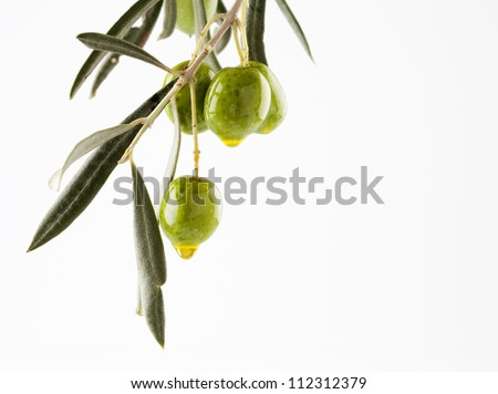olive branch with olives and oil isolated on white background with copy-space