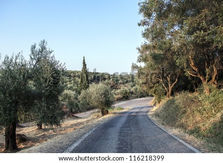 olive grove and road - stock photo