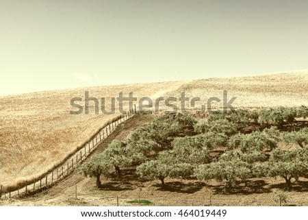 Olive Groves on the Plowed Sloping Hills of Sicily in Italy, Vintage Style Toned Picture