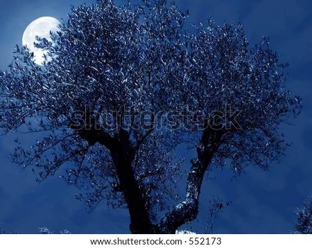 olive night - stock photo