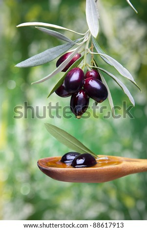 olive oil drop falling from black olives. Spain - stock photo
