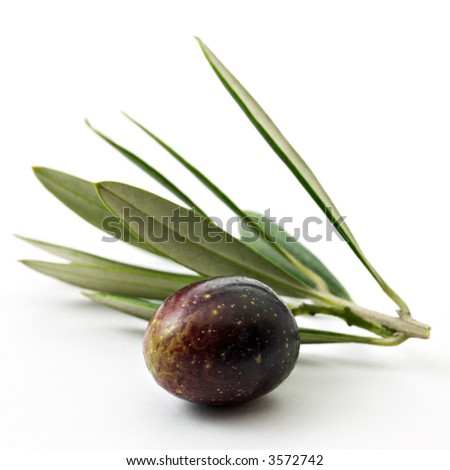 Olive on branch - stock photo