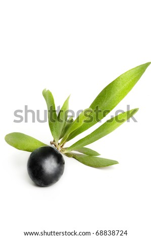 Olive on branch isolated