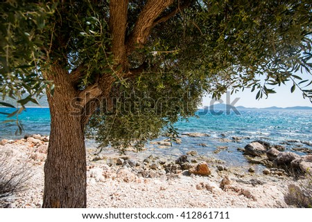 olive tree and the blue Mediterranean Sea