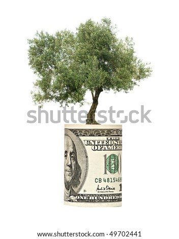 olive tree  growing from dollar bill - stock photo