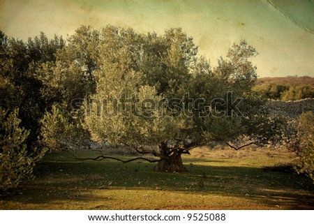 Olive tree on vintage background