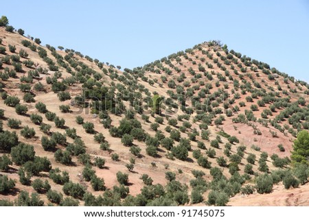 Olive trees,Cazorla and Segura mountain range,Jaen,Andalusia,Spain - stock photo