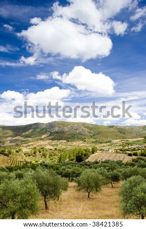 olive trees, Douro Valley, Portugal - stock photo