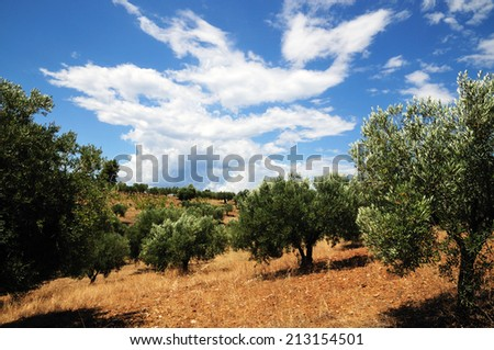 Olive trees, Greece - stock photo