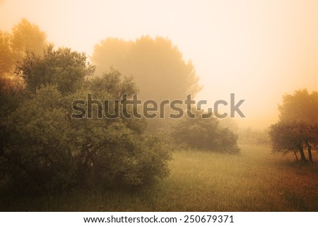 Olive Trees in a fog. Mistral wind blows in Provence (France). Aged photo. - stock photo