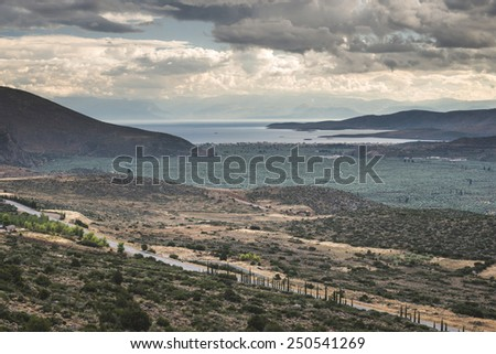 Olive trees in Delphi, Greece. Sea on the background. Greece - stock photo