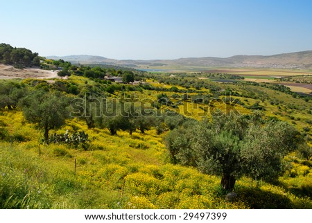 Olive trees on a hill slope, horizontal - stock photo