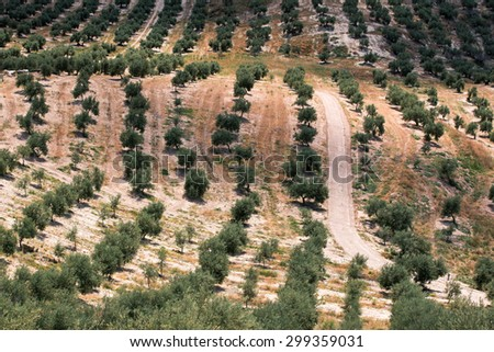 Olive trees on hills in Jaen province, Spain - stock photo