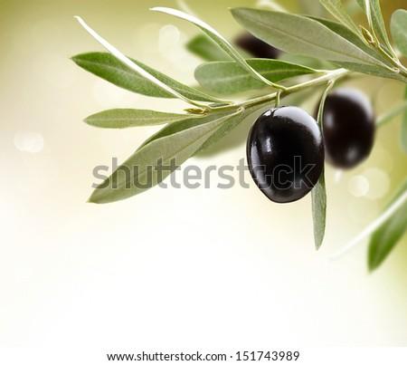 Olives. Black Ripe Olive on a tree. Food Border Design. Over White Background - stock photo