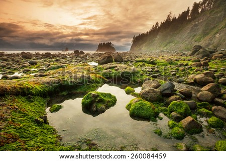 Olympic National Park landscapes - stock photo
