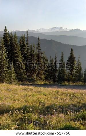 Olympic national park, WA - stock photo