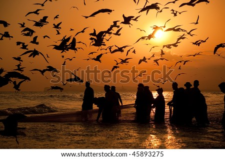 Omani fishermen pulling the net full of fishes  out of the water - stock photo