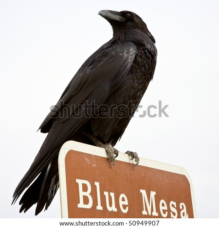 Ominous Looking raven perched on top of a sign post in the Pained Desert, Arizona. - stock photo