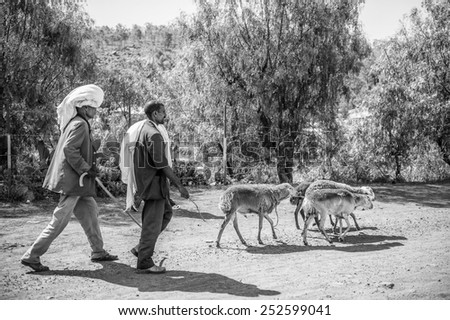 OMO, ETHIOPIA - SEPTEMBER 21, 2011: Unidentified Ethiopian man and rams in the street. People in Ethiopia suffer of poverty due to the unstable situation
