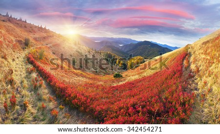 On high alpine pastures of the Carpathians in Ukraine comes the golden autumn with its fantastic colors, covering the forests and meadows. Against the backdrop of peaks red beech forests are beautiful
