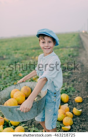 on melon field boy in jeans and a blue cap collects ripe melon