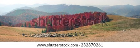 On pastures near the beautiful mountain peaks live in huts Hutsul shepherds Ukraine herding sheep in summer. Sometimes they remain until the fall, do not come until the cold - stock photo