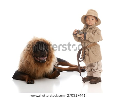 On Safari.  Adorable toddler dressed in Khaki and holding a toy camera in his hand next to a rottweiler wearing a lion mane costume.  Isolated on white.   - stock photo