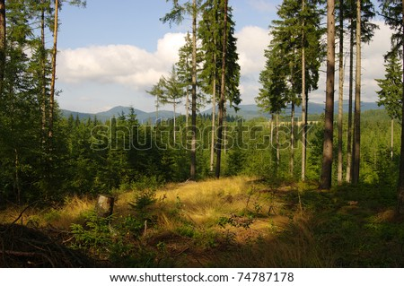 On the brink of forest - stock photo
