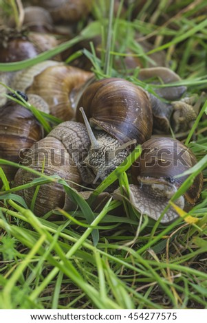 On the grass crawling snail