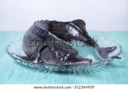 On the green-blue wooden background large clear glass dish with a large of whole raw fish sturgeon - stock photo