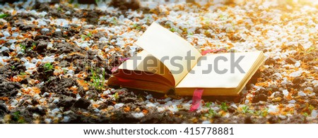 On the ground, covered with white petals is an open book with a red heart. Toning. Focus on the front of the book - stock photo
