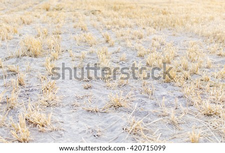 On the hay field in village in summer time - stock photo