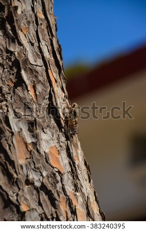 On the island of Crete (Greece) contain a large number of cicadas - stock photo