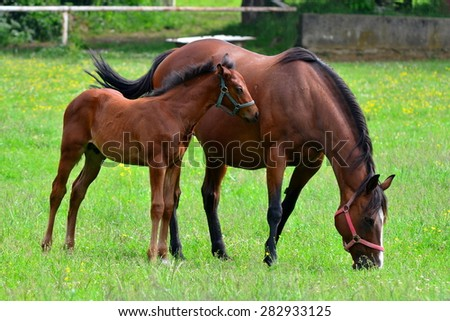 on the pasture - stock photo