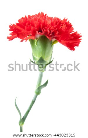 on top red carnations flower isolated on white background