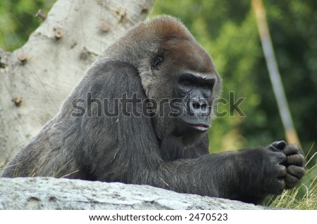 On watch - stock photo