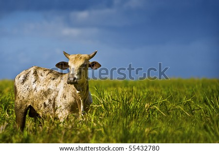 One beautiful Cow - stock photo